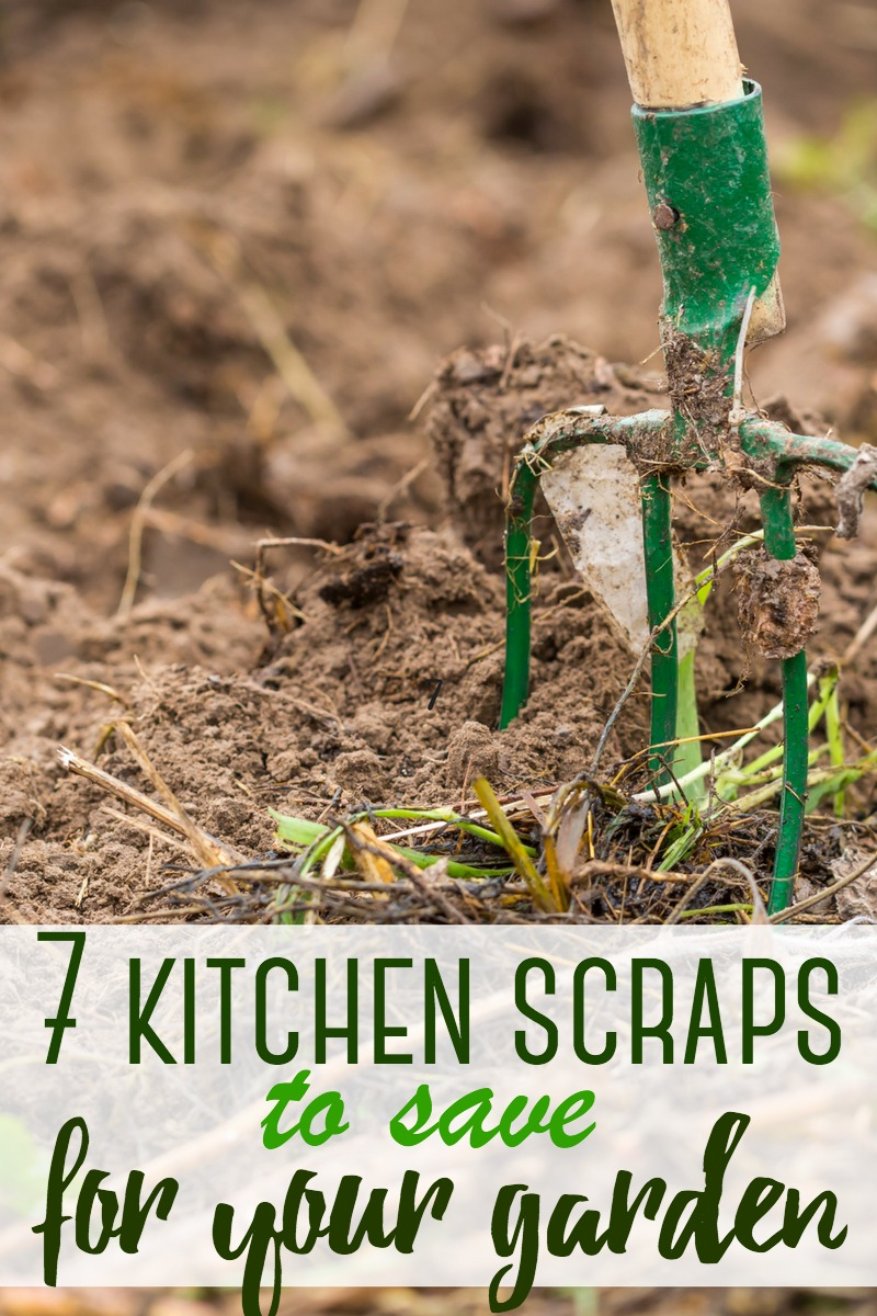 Some food scraps don't need to be scrapped - here are 7 kitchen scraps to save for your garden.  #garden #kitchenscraps #scraps #gardening