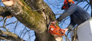tree removal process