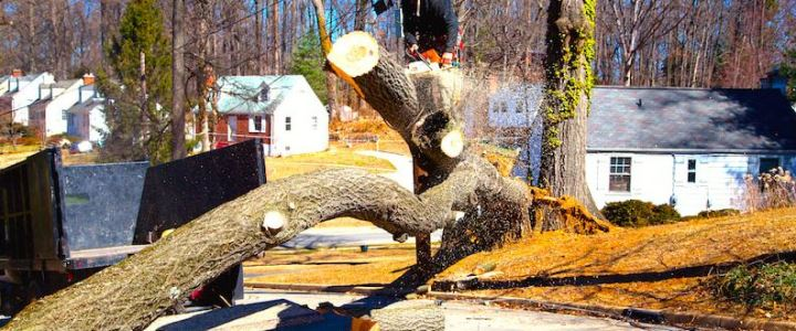 Reasons to Carry Out Tree Removal in Your Compound