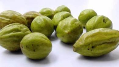 Photo of Benefits Of Chebulic Myrobalan