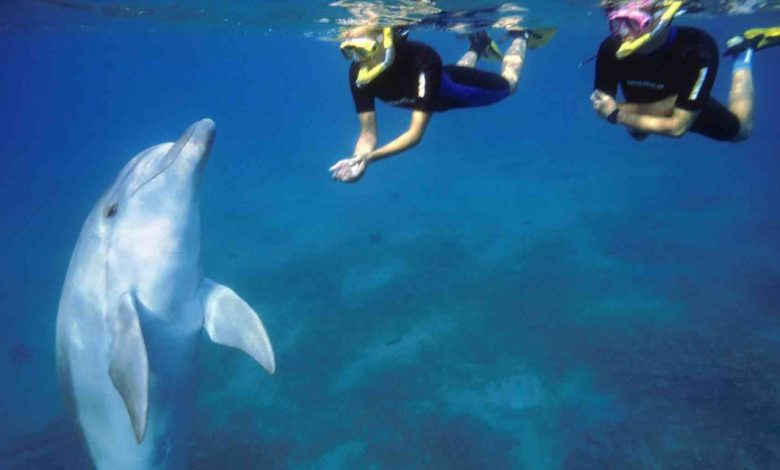 Top 8 Tips for an Exciting Snorkeling Experience