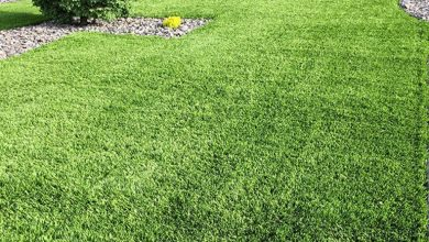 Photo of Guidelines To Remember Before Purchasing Artificial Grass Geelong