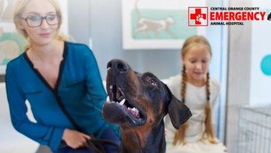 Photo of What do you do in a Pet Emergency? COAEAH
