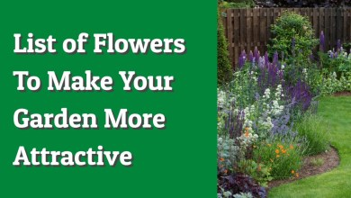 Photo of List of Flowers to Make your Garden More Attractive