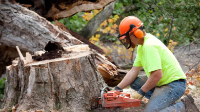 Photo of 09 Benefits of Hiring the Professional Tree Removal Company