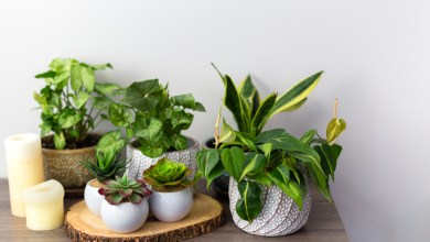 Photo of How to Make Fake House Plants Safe During the Holiday Season