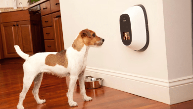 Photo of Gadgets to Make your Pet's Home Life Easier.
