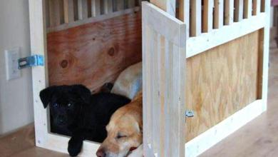 Photo of What Is the Best Type of Dog Crate Cage for Your Feathered Friend?