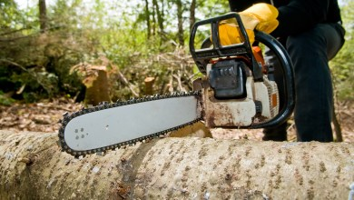 Photo of The Benefits of Hiring the Commercial Tree Removal Service