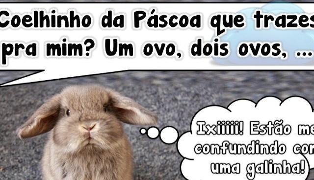 Coelhinho da Páscoa?
