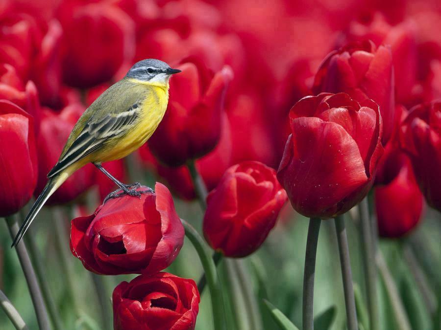 Resultado de imagem para flor maravilhosa