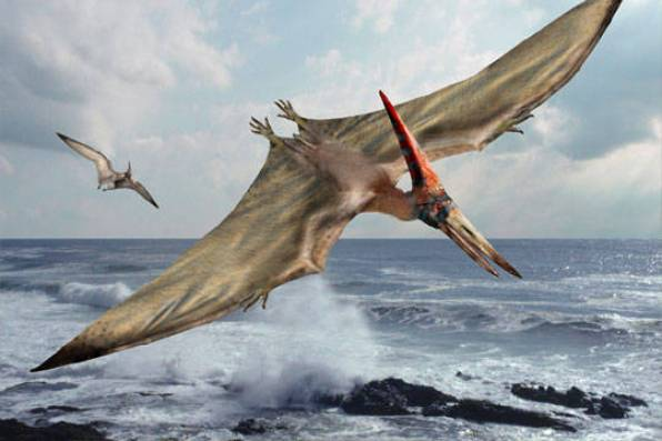 pterosaur_fun_facts