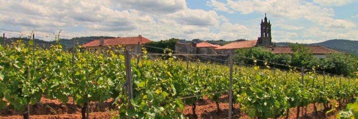 UK plantará un millón de viñas este año