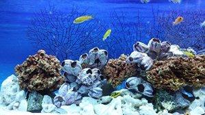40kg mixte Lot de pierres pour Cichlidae du Malawi Tanganyika Aquarium Ocean Rock