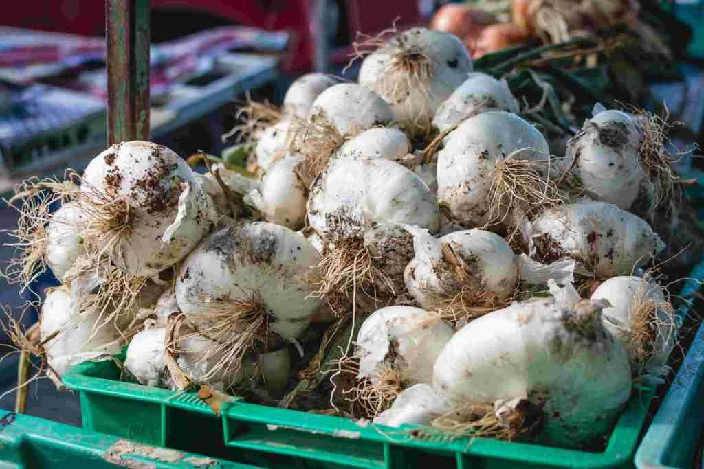 Fresh Garlic For Garlic Infused Oil