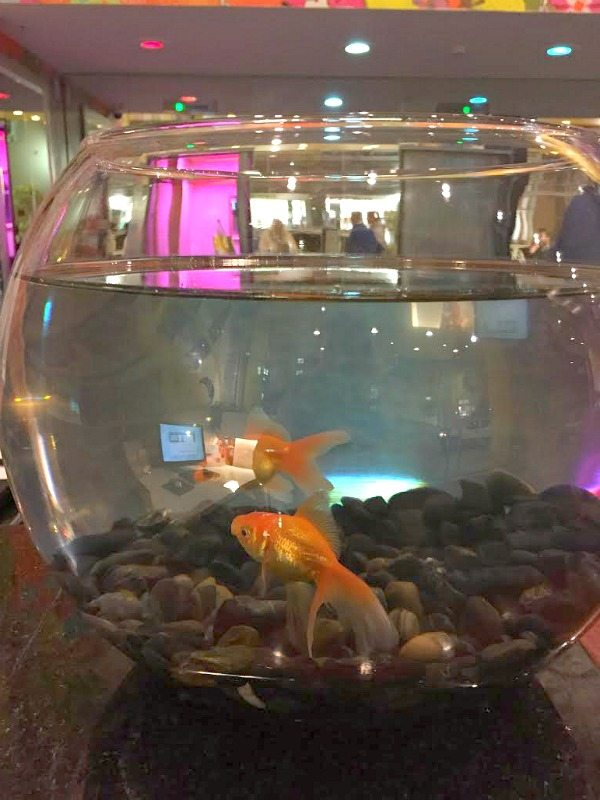 Hotel Triton Fish