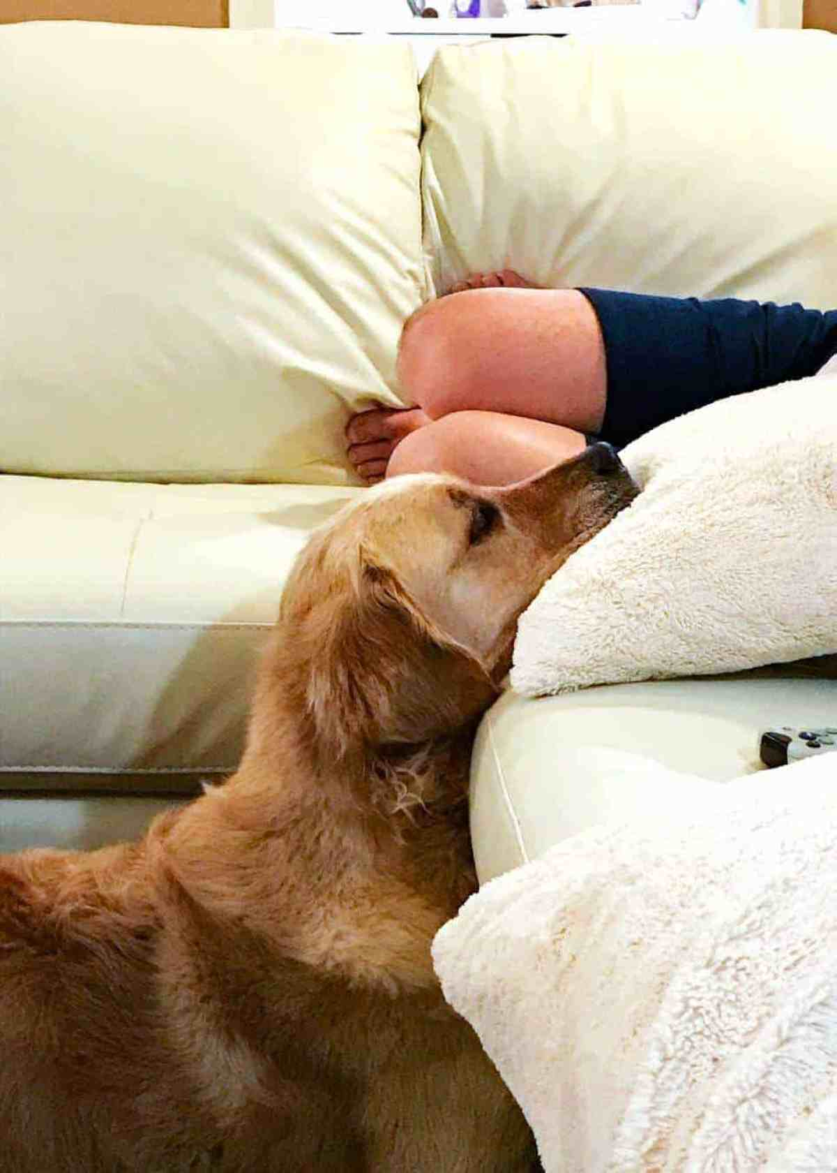 dozer-head-on-cushion