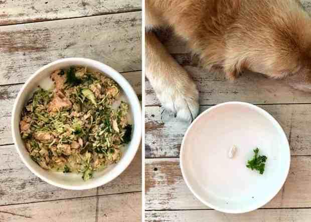 Dozer leaving kale in food bowl