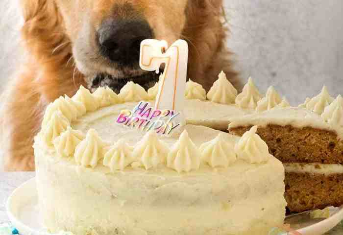 Dog Cake Recipe For Dozers Birthday Recipetin Eats