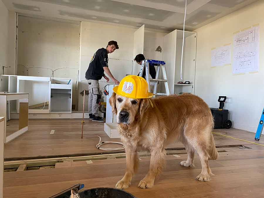 Dozer the project manager