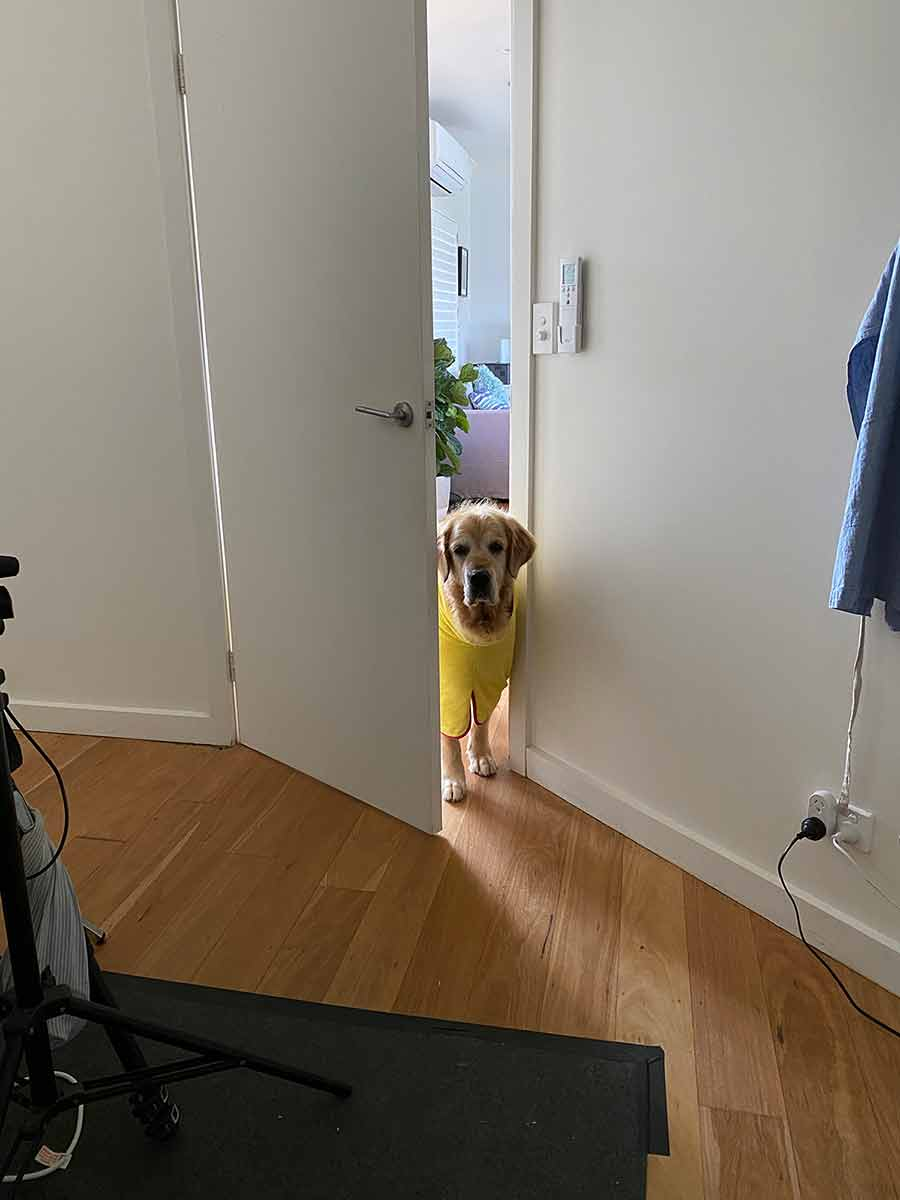 Dozer wanting to come into shoot room