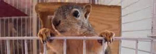 8  Squirrel in a Cage – Reclaimed Truth