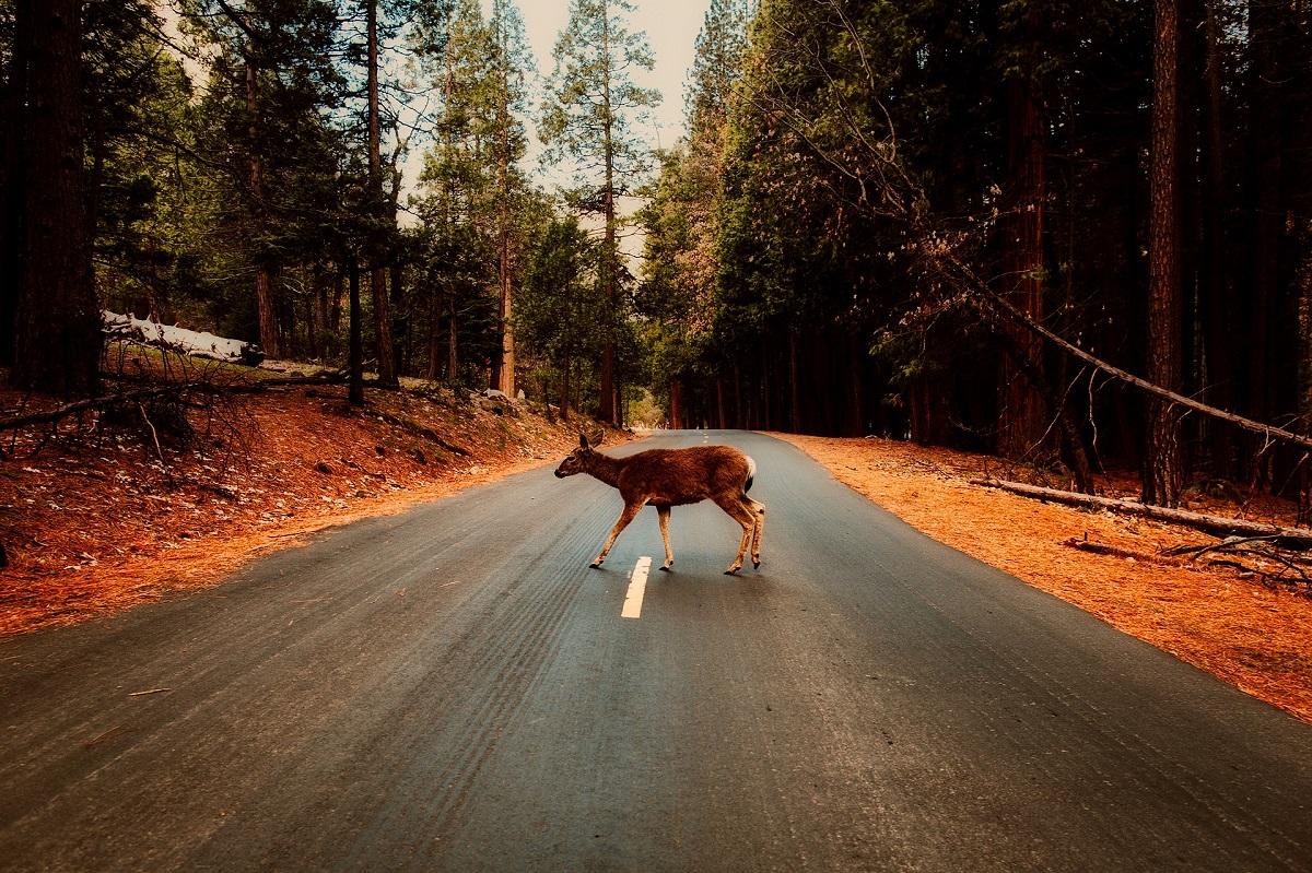 accidente con animales cinegéticos reclamador