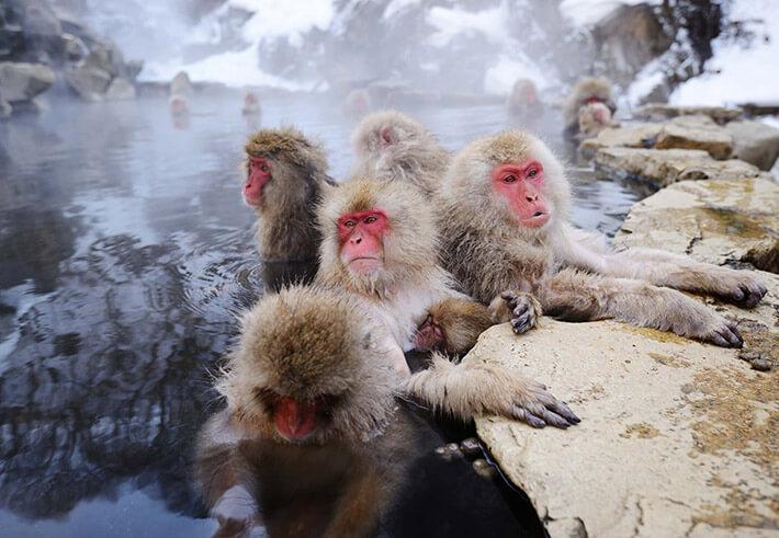 Jigokudani Monkey Park, Yamanouchi Town