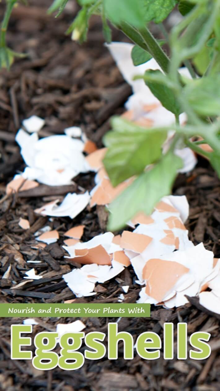 Nourish and Protect Your Plants With Eggshells