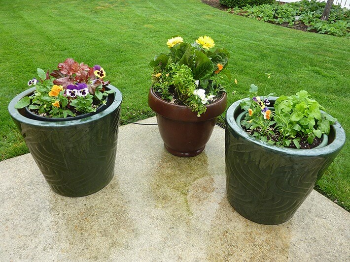 Container Gardening With Flowers