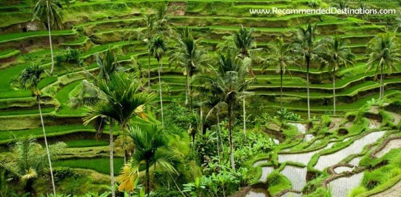 Ubud - Recommended Destinations