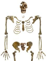 Nazlet Khater skeleton