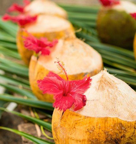 coconuts hibiscus peaceful