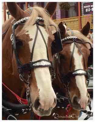 horses-in-winter