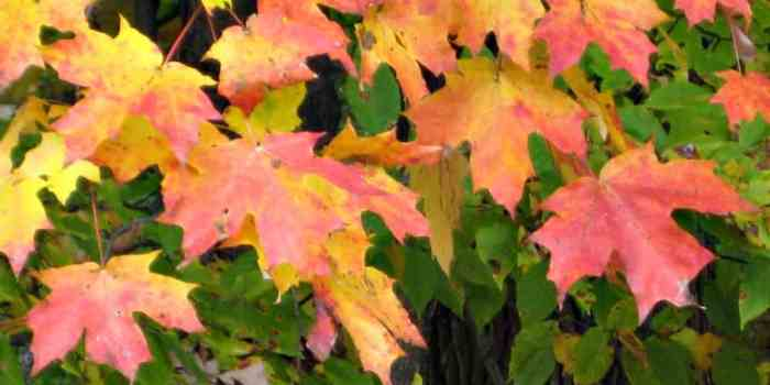 Paint the Colours of a Canadian Fall 2017