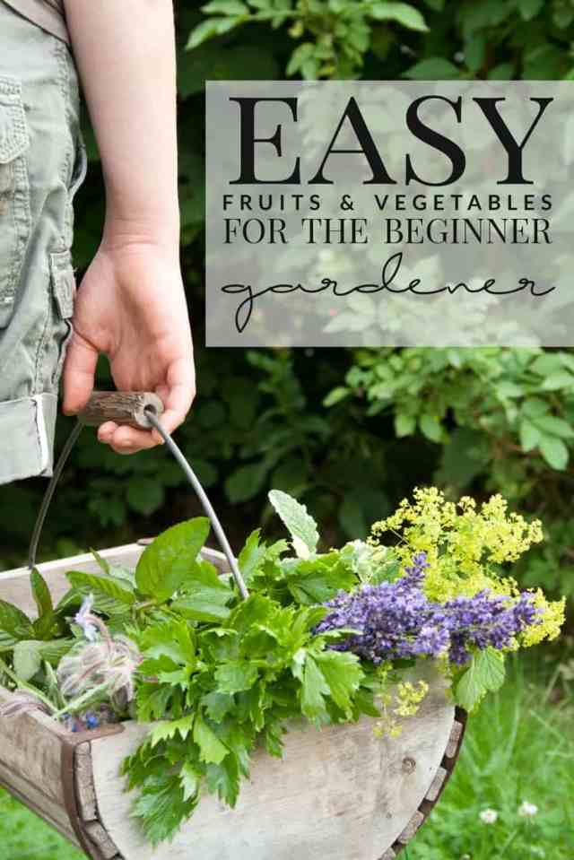 easy vegetable and fruits to grow for beginners