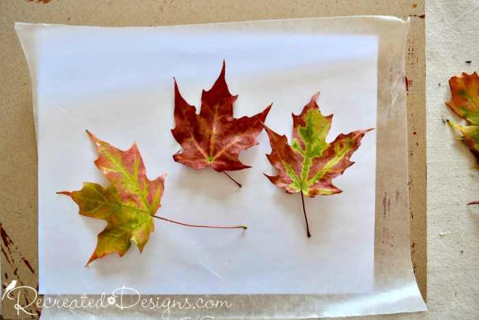 preserving Maple leaves with wax paper