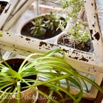 plants in a glass box with very chippy paint