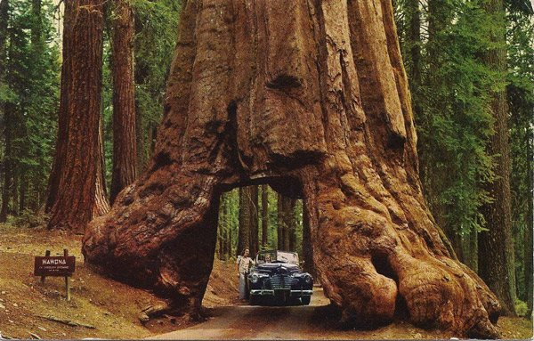 túnel a travéz de un árbol