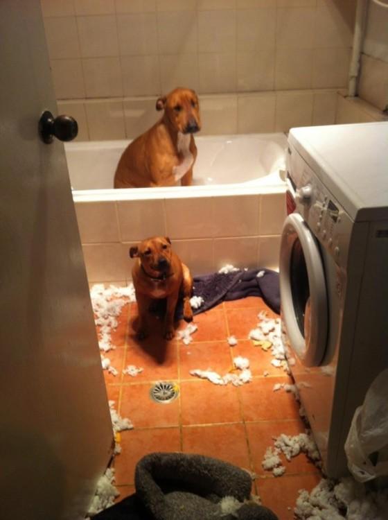 desorden en el baño