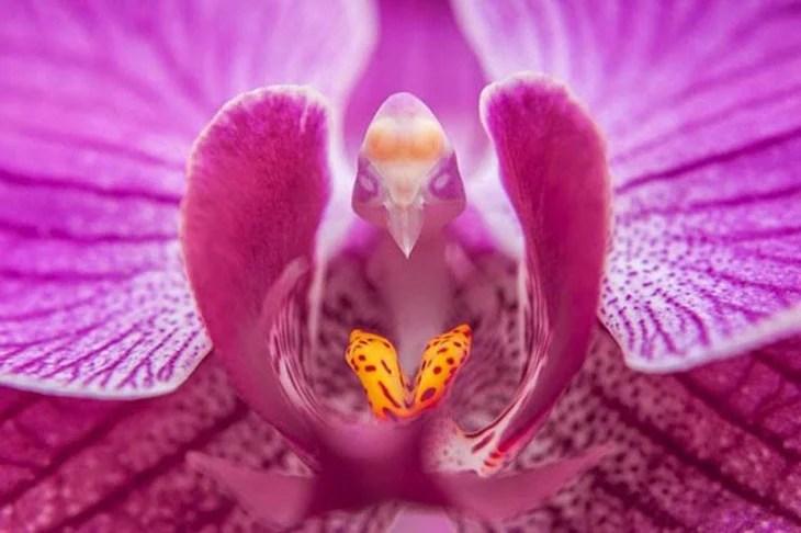 Flor que parece tener la cara de un pájaro
