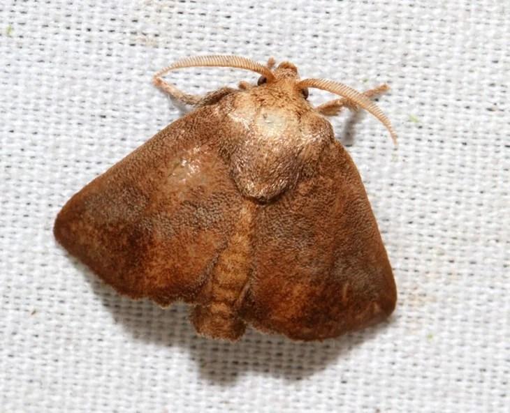 Mariposa isa textula sobre una superficie blanca