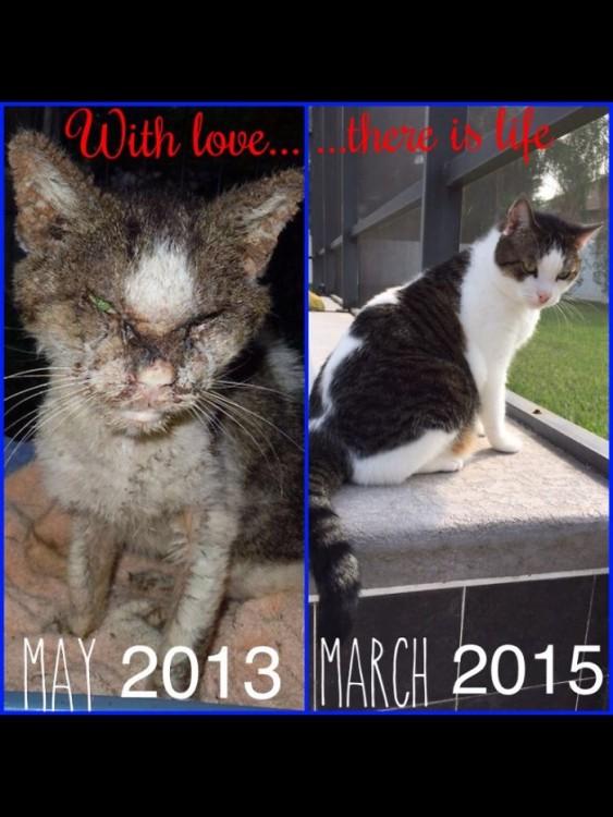 gatos heridos y curados
