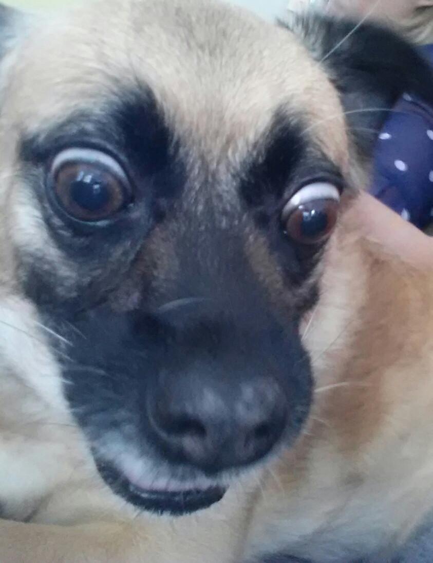 25 Perros Que Son Expertos Para Tomarse Selfies