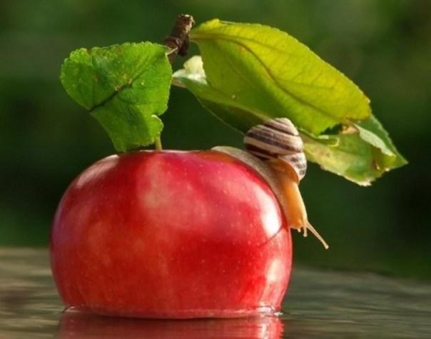 caracol posando sobre una manzana