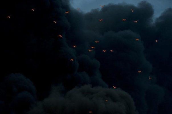 Pajaros iluminados por humo de fuego