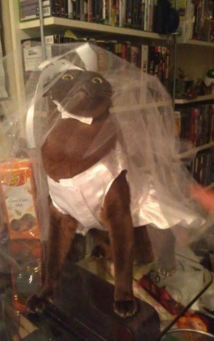 gata vestida de novia