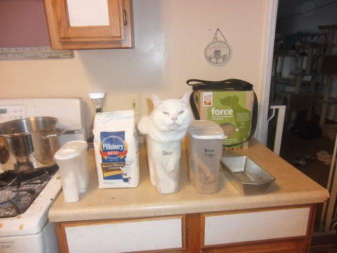 gato en un tuper