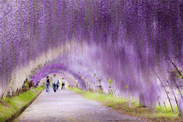 tunel de flores