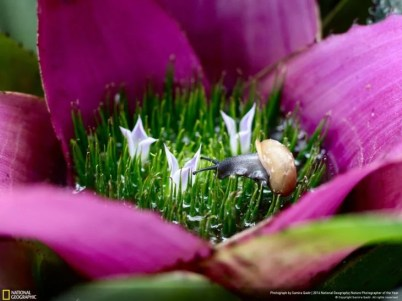 caracol pequeño en flor